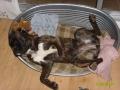Brianie, épuisée par son agility !!