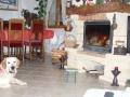 beethoven : un peu de chaleur, j'adore la cheminée !