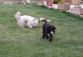Bambo : allez Raoul court ! c'est moi qui ait la balle.