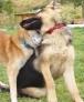 Stella et Wolf : pour un flirt  avec toi.!!