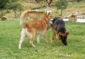 Stella et Wolf : une belle histoire va commencé !