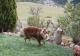 ya bien des moutons dans le pré en face ?