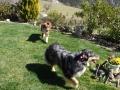 Végas : vient jouer !  laisse les moutons ! pour une fois qu'on n'a pas à courir après !