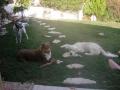 Plouf : fait trop chaud, on se repose un peu ! les bêtises là , c'est pas nous !