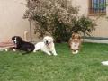 Plouf : le club des puppies : d'ziggy, chynemoon et moi : entre 5 et 10 mois d'âge