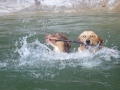 BELLE et CHYNEMOON , en mission de sauvetage !!
