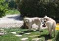 DENVER ET DOUGLAS. les 2 frangins ! on attend de l'eau !