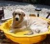 DOUGLAS, c'est ma piscine à moi ! enfin mon bain est prêt !
