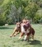 BISHARA : avec mon pote C'shinemoon ! on s'éclate au sprint !