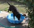 DUC (labrador) : en thalasso chez sa mono ! avec Alfie