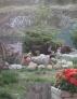 CACAO avec Viva (la maman de notre C'shinemoon, berger australien).