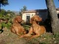 Saba et Gini : une prestance magnifique et si gentilles !!