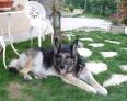 OLYMPE : la meilleure chienne du monde pour mes maîtres