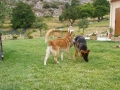 WOLF et Stella (adoptée), les inséparables !