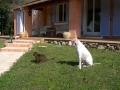 Twid et grisminou regardant dans la même direction