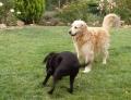 Yako (et Biscotte). joueur et joyeux ! quelques jours avant