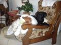 Lola et Raph : un fauteuil pour 2  !! pour de vrai !