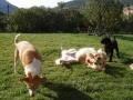 Beethoven (golden) : hé Bambo et kenza ; regardez-moi faire le clown !