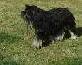 bonhomme : berger polonais de plaine : 1 nizinni. super cool !