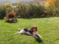 chaya (beagle) : 1 mois en colo !! je voudrais que ça recommence !!