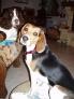 Chaya et Balthazar : 2 regards si craquants ... qu'on oublie les bonnes habitudes !!