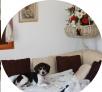 TAO. un beagle qui imite une autre beagle ! sur le canapé