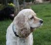 Geeny : j'ai des parents en or  ! une colo en or  ! une vie de chien koi !!