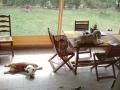 Abi en sieste et Geeny attablée: pas gênée la fifille !!