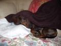 Ulki : coucou c'est moi !  mon plaisir : dormir caché !!