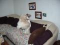 GEENY avec Alfie : la salsa sur le canapé !:!