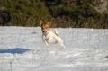 ALFIE : sur la neige , je vole !!!