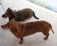 COCO et BIFI : nous sommes 2 amours inséparables !