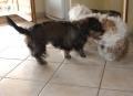 ELFY avec Charly : la  cha-u-tte !!