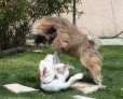 BEUZ (jack) : ho  NALA, té une vraie lionne ! !